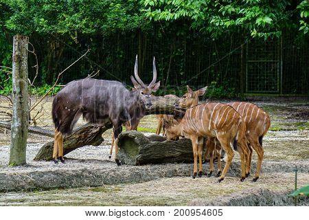 Group Of Deers Feeding At The Zoo