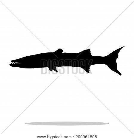 Barracuda fish black silhouette aquatic animal. Vector Illustrator.
