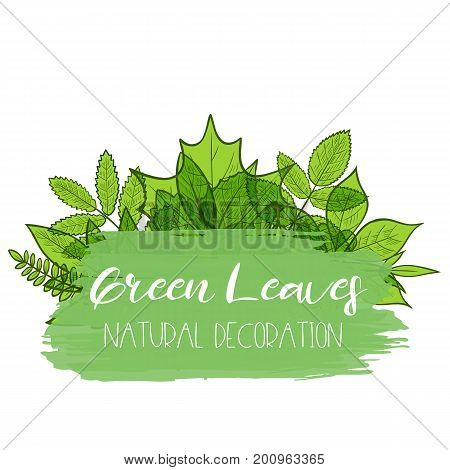 Background with colorful transparent skeleton green leaves natural decoration. Vector