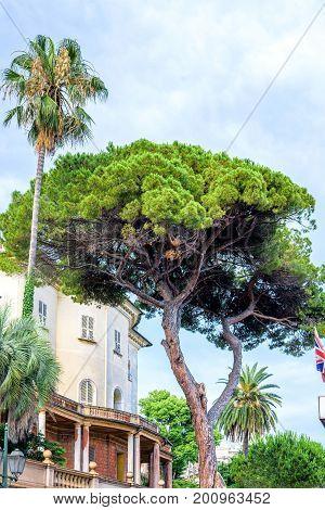Daylight view to a green tree near buildings of Santa Margherita Ligure, Italy.