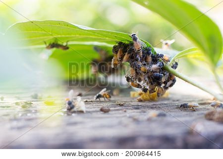 Abstract Bees swarming on the green leaf