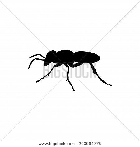 Ant insect black silhouette animal. Vector Illustrator.
