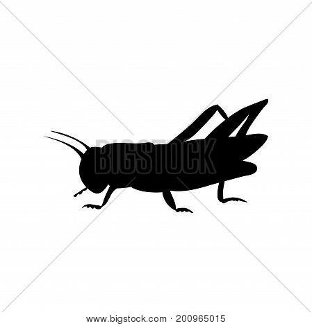 Locust grasshopper insect black silhouette animal. Vector Illustrator.