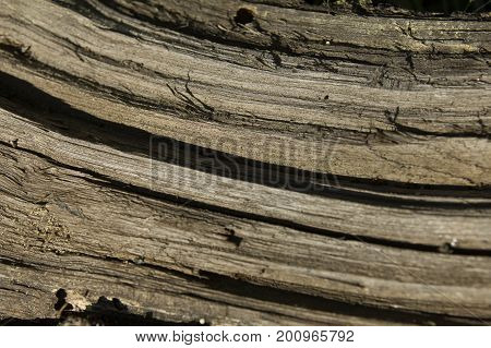 Old decrepit dry wooden texture or background, close up