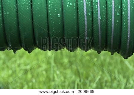 Garden Hose After Rain