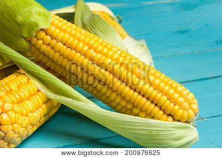 Ripe yellow sweet corn cob on a turquoise wooden table close-up