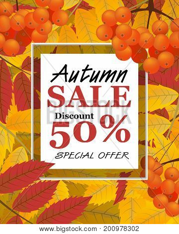 Vertical background with rowan berries leaves and sign autumn sale fall. Vector illustration.