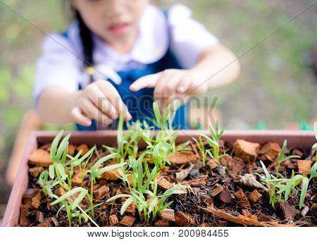 Child in the kitchen garden at Home