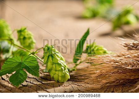 Hop Cones with Barley on the Woden Desk