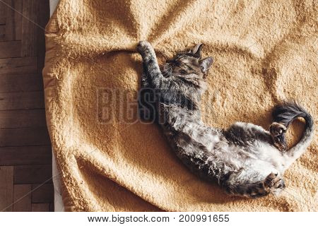 Beautiful Cat Sleeping On Stylish Yellow Blanket With Adorable Emotions In Rustic Room, Top View. Cu