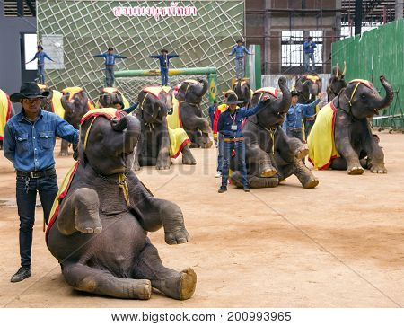 THAILAND, PATTAYA, MARCH, 10, 2015 - Sitting elephants on Elephants show in Nong Nooch private botanical garden in Pattaya, Chonburi Province, Thailand