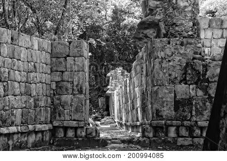 A view of a Mayan ruins in the middle of the jungle in the old Maya city of Santa Rosa Xtampak in Campeche Mexico light environment daylight with a background of vegetation trees in a jungle. Black and white
