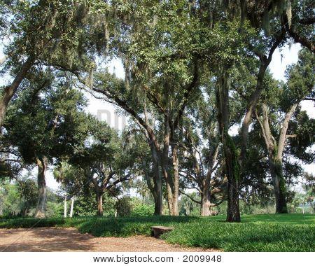 Trees At Bok Tower