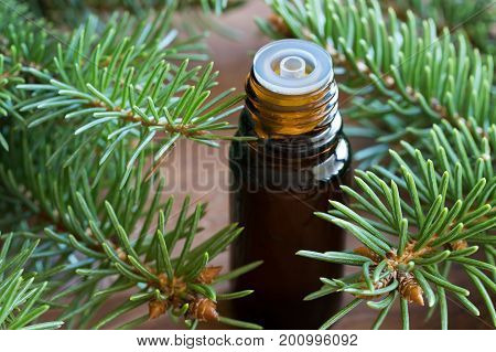 A Bottle Of Spruce Essential Oil With Spruce Twigs