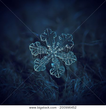 Real snowflake macro photo: large snow crystal of split plate type with fine symmetry, simple shape and internal pattern. Snowflake glowing on dark blue textured background in natural light.
