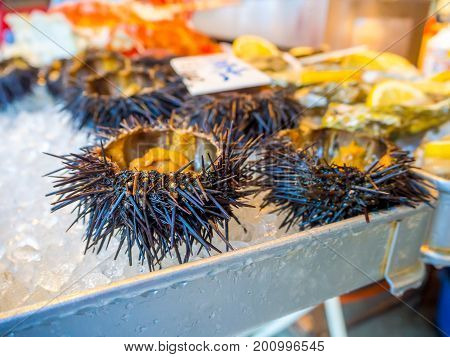 TOKYO, JAPAN JUNE 28 - 2017: Sea urchin for sale at the Fish Market Tsukiji wholesale in Tokyo Japan, Tsukiji Market is the biggest wholesale fish and seafood market in the world.