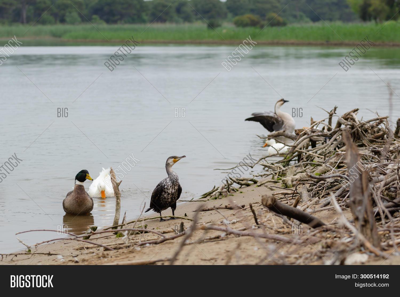 Deep Black Cormorant Image Photo Free Trial Bigstock