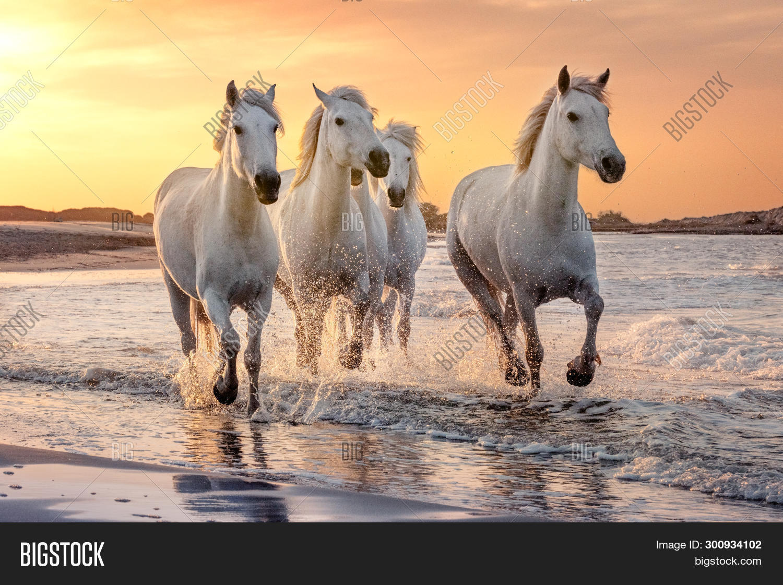 White horse - Wikipedia | 1121x1500