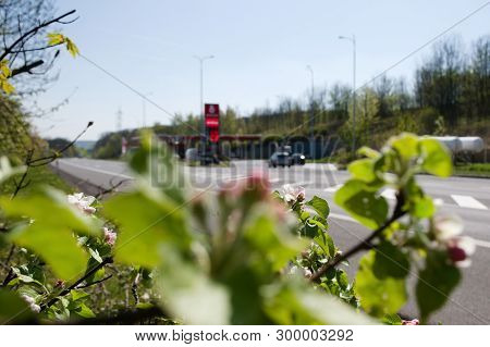 Prosetice, Czech Republic - April 20, 2019: Spring Flower Near Filling Station