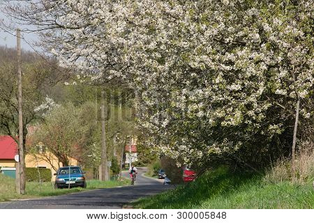 Oparno, Czech Republic - April 20, 2019: Flowering Tree In Front Of Village In Spring