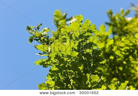 Bright Foliage