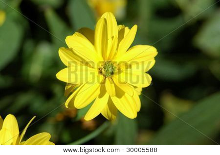 the yellow flower on the soft green background