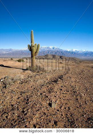 Landscape in Los Cardones national park