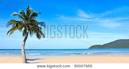 Tropical beach with exotic trees on the sand. Luxury destination.