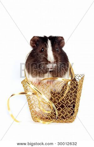 Guinea Pigs With A Ribbon In A Gold Basket