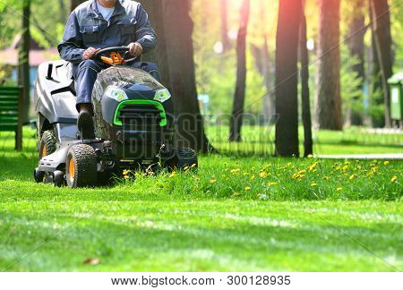 Green Grass Treeming With Lawn Mower In Sunny Day