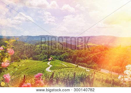 Famous Heart Shaped Wine Road In Slovenia - Austria In Summer, Heart Form - Herzerl Strasse, Vineyar