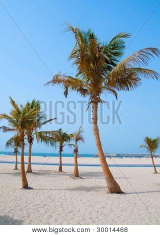palm trees on the sandy beach