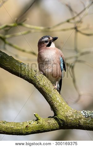 Love The Expressiveness Of This Jay - Proper Poser!