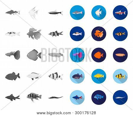 Different Types Of Fish Mono, Flat Icons In Set Collection For Design. Marine And Aquarium Fish Vect