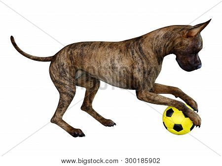 3D rendering of a female brindle Great Dane dog isolated on white background poster