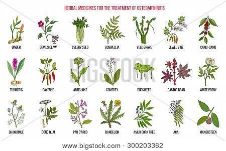 Best Herbal Remedies For Osteoarthritis. Hand Drawn Botanical Vector Illustration