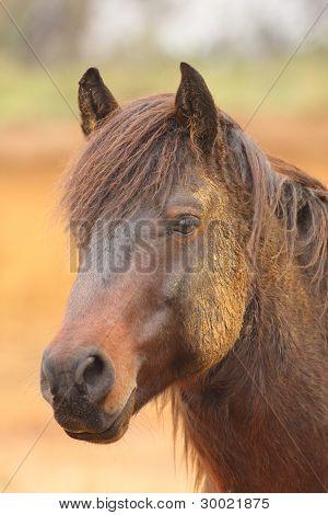 Portréty koní