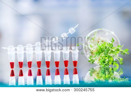 Quality Control With Dna Amplification Test, Pcr Strip For This Assay And Sample Of Cress Salad For