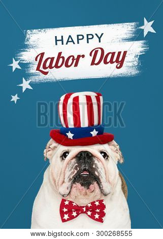 Happy labor day from a cute white English Bulldog puppy