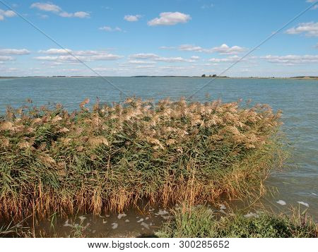 View Of The Lake Chany, Novosibirsk Region, Siberia, Russia