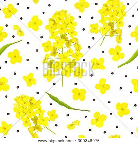 Blossoming Rapeseed, Flowers, Seeds, Leaf Seamless Pattern Isolated. Canola Or Colza. Brassica Napus