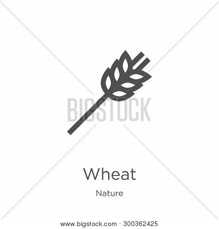 Wheat Icon Isolated On White Background From Nature Collection. Wheat Icon Trendy And Modern Wheat S