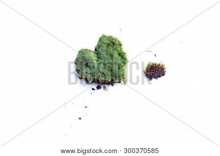 Green Moss On White Background. Green Moss Isolated On White Bakground