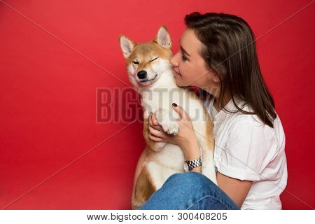 Adorable Dog,adult,affection,animal,background,banner,beautiful,canine,caucasian,charming,cheerful,c