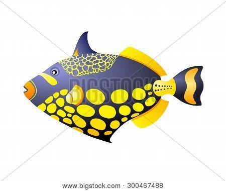 Triggerfish Aquarium Tropical Fish For Web And Print