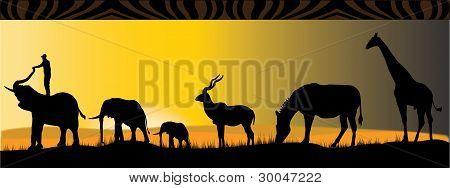 Africian Safari
