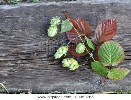 Hops and leaves on the board