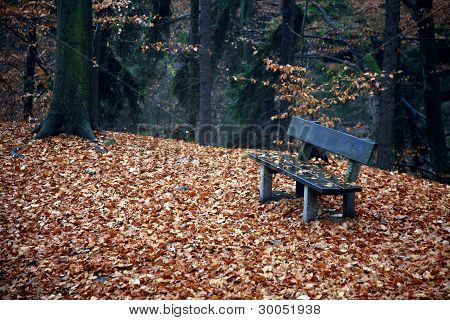 Bench In The Forest In Autumn