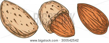 Shelled And Unshelled Almonds Isolated On A White Background