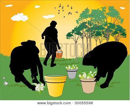 gardeners working in the field